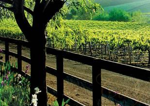 Saulainās Kalifornijas vīni